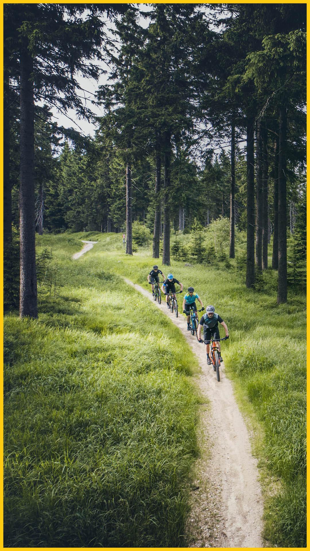 Vier Leute fahren mit dem CUBE Bikes im Thüringer Wald auf dem Rennsteig Radweg