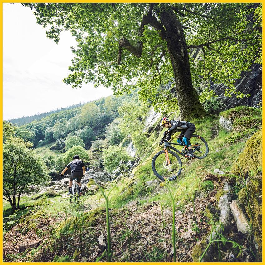 Zwei Männer fahren mit CUBE Mountainbikes im Thüringen Wald auf dem Rennsteig Radweg