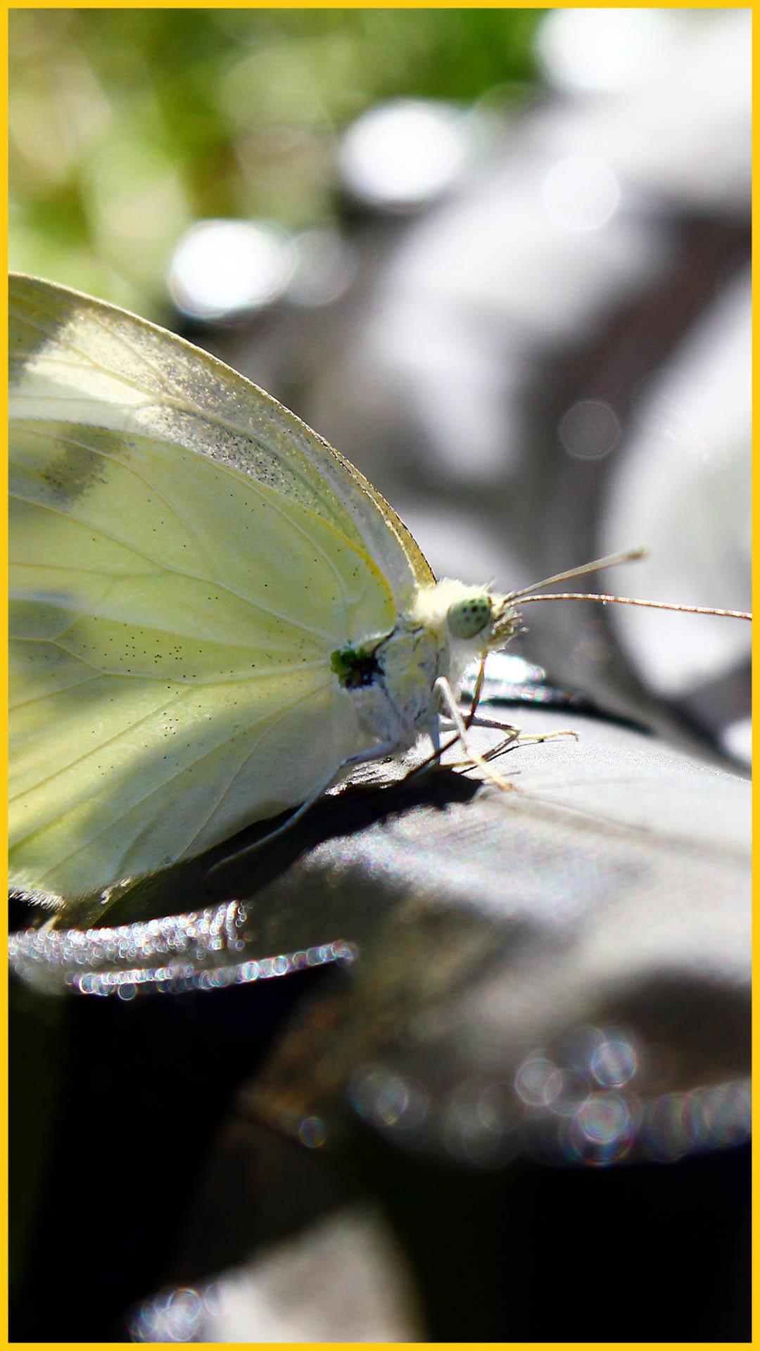 Nahaufnahme eines gelben Schmetterlings auf einem Fahrradreifen auf dem Werratal Radweg durchgeführt von Werra Bikes